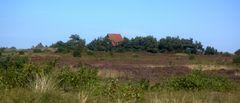 Heide im September 2010