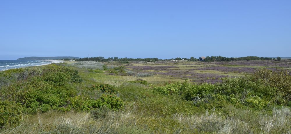 Heide/ Insel Hiddensee