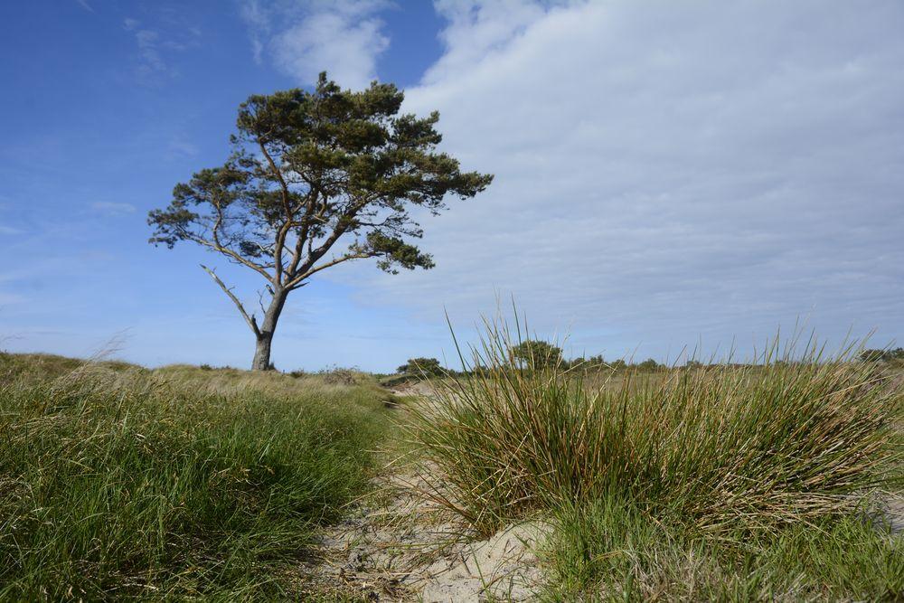Heide -Land im Mai