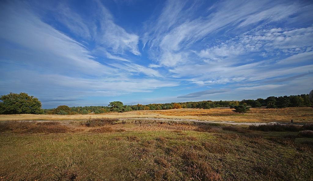 Heide-Landschaft