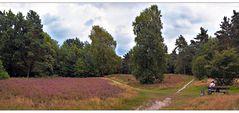 Heideblüte in Worpswede - Marcus Heide