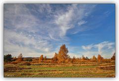 Syrauer Heide