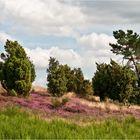 Heidelandschaft ...