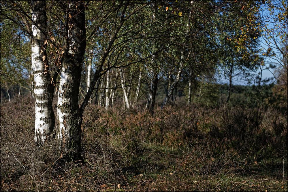 Heidelandschaft..