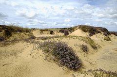 Heidelandschaft am Morsumer Kliff -1