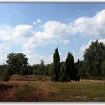 Heidelandschaft I