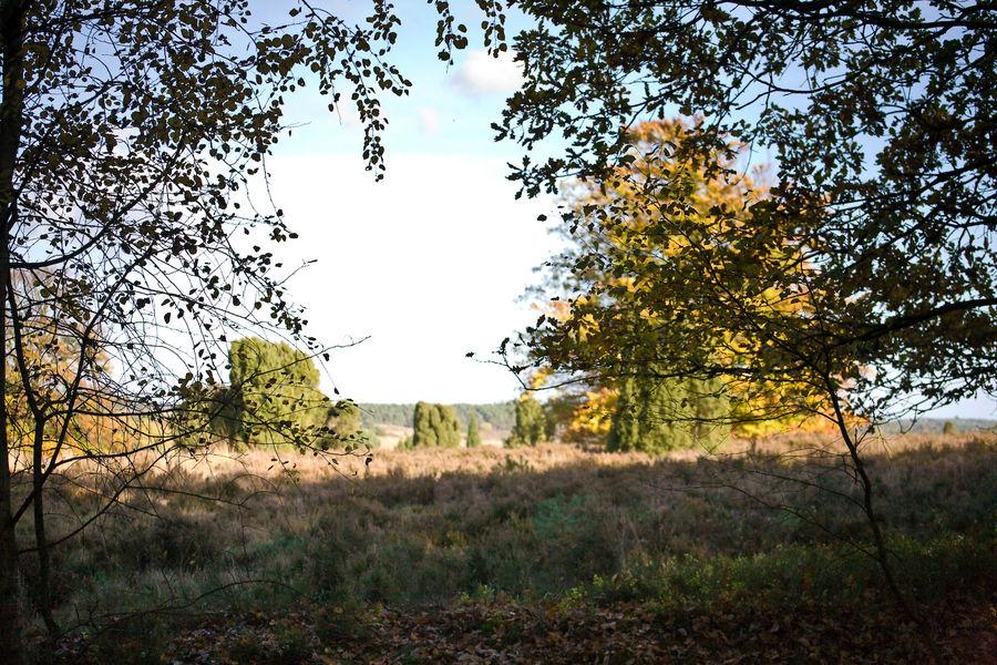 Heidelandschaft im Herbst II