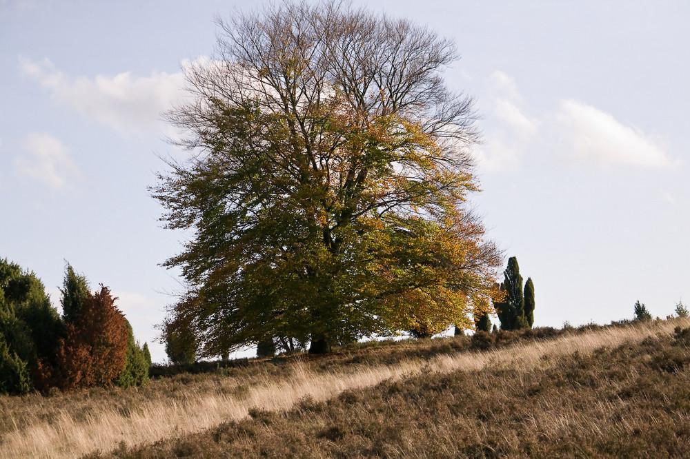 Heidelandschaft im Herbst III
