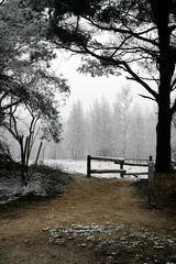 Heideweg im Winter