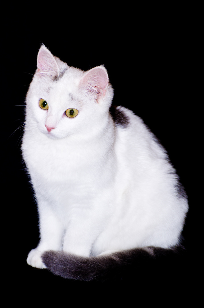 Heidi Klum - Angie´s Katze