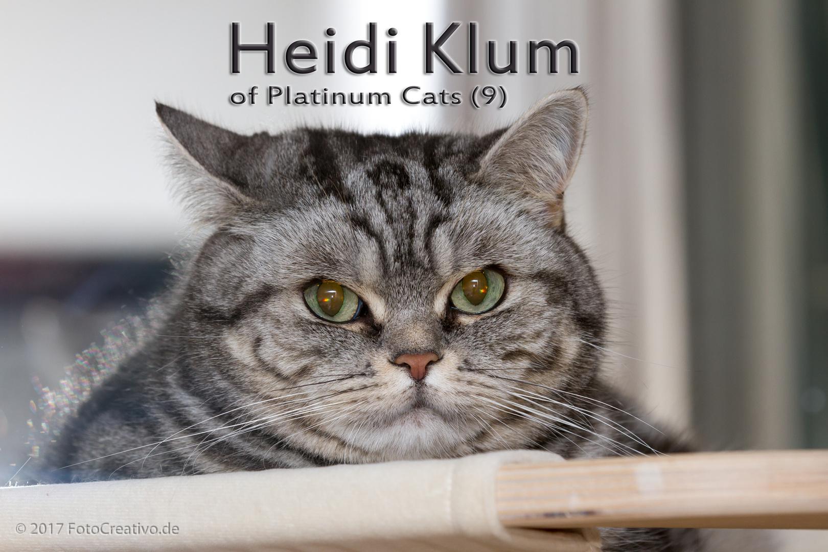 Heidi Klum of Platinum Cats