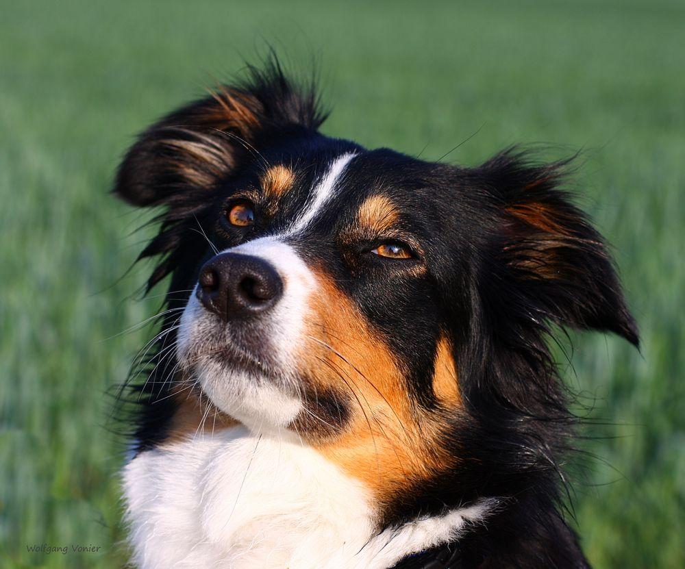 * Heidis Hund *