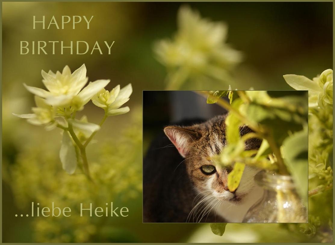 Heike hat Geburtstag
