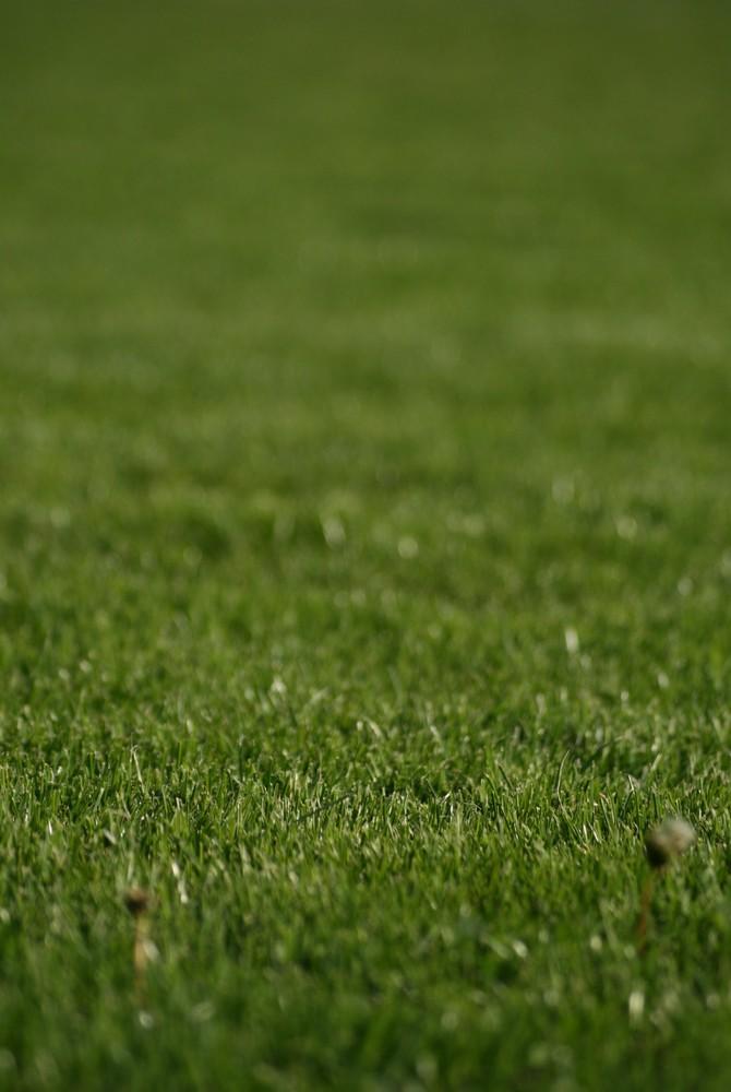 Heiliger Rasen