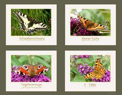 Heimische Schmetterlinge