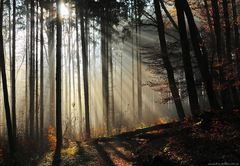 Heimlich erreichte der Herbst