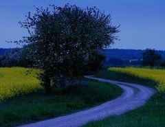 HEIMWEG zur blauen Stunde... (Blick zurück...) - 2. Variante: freigestellter Baum