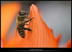 Heiße Biene am Gipfel