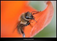 Heiße Biene badet in Unschärfe