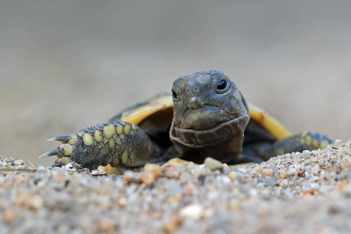 Heißer Sommer 2018 Schildkrötenschlupf in Deutschland