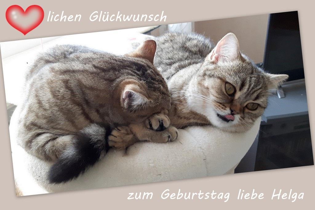 Helga Hat Geburtstag Foto Bild Tiere Haustiere Katzen Bilder