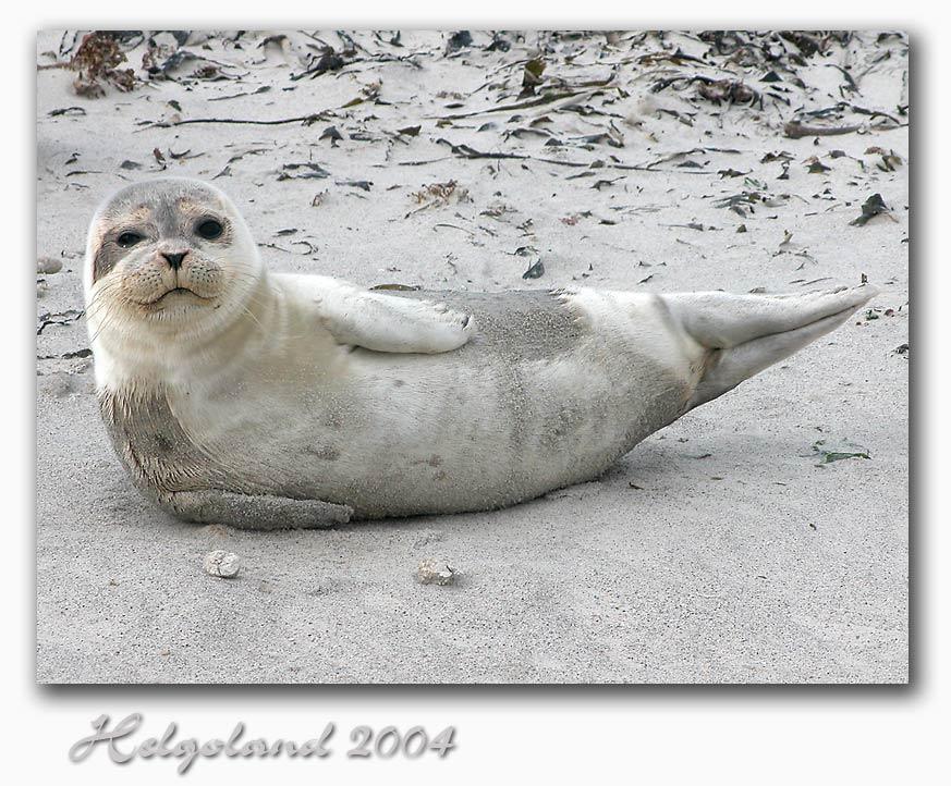 Helgoland 2004