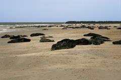 Helgoland Düne 16