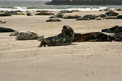 Helgoland Düne 17