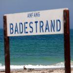 Helgoland - Eiderente - Strandspaziergang auf der Düne