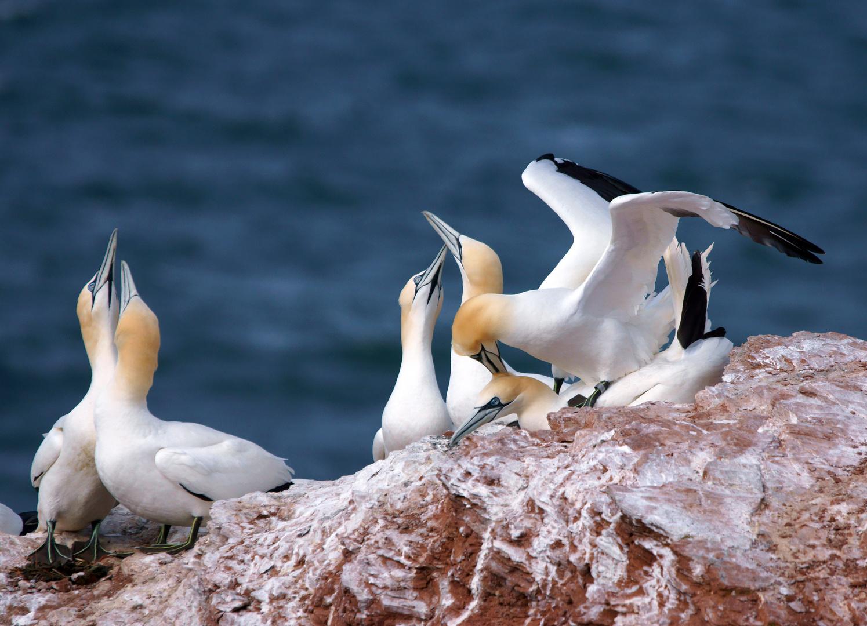 Helgoland... Insel der Verliebten...