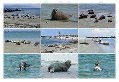 Helgoland - Seehunde auf der Düne