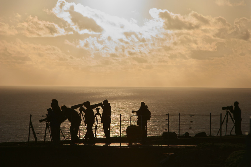 Helgoland - Westklippen - Sie lauern auf das ultimative Bastölpel-Foto