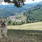 Heliott fait son beau en Ardèche, sur le fond le Mont Gerbier de Jonc