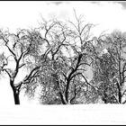 Heller Winter