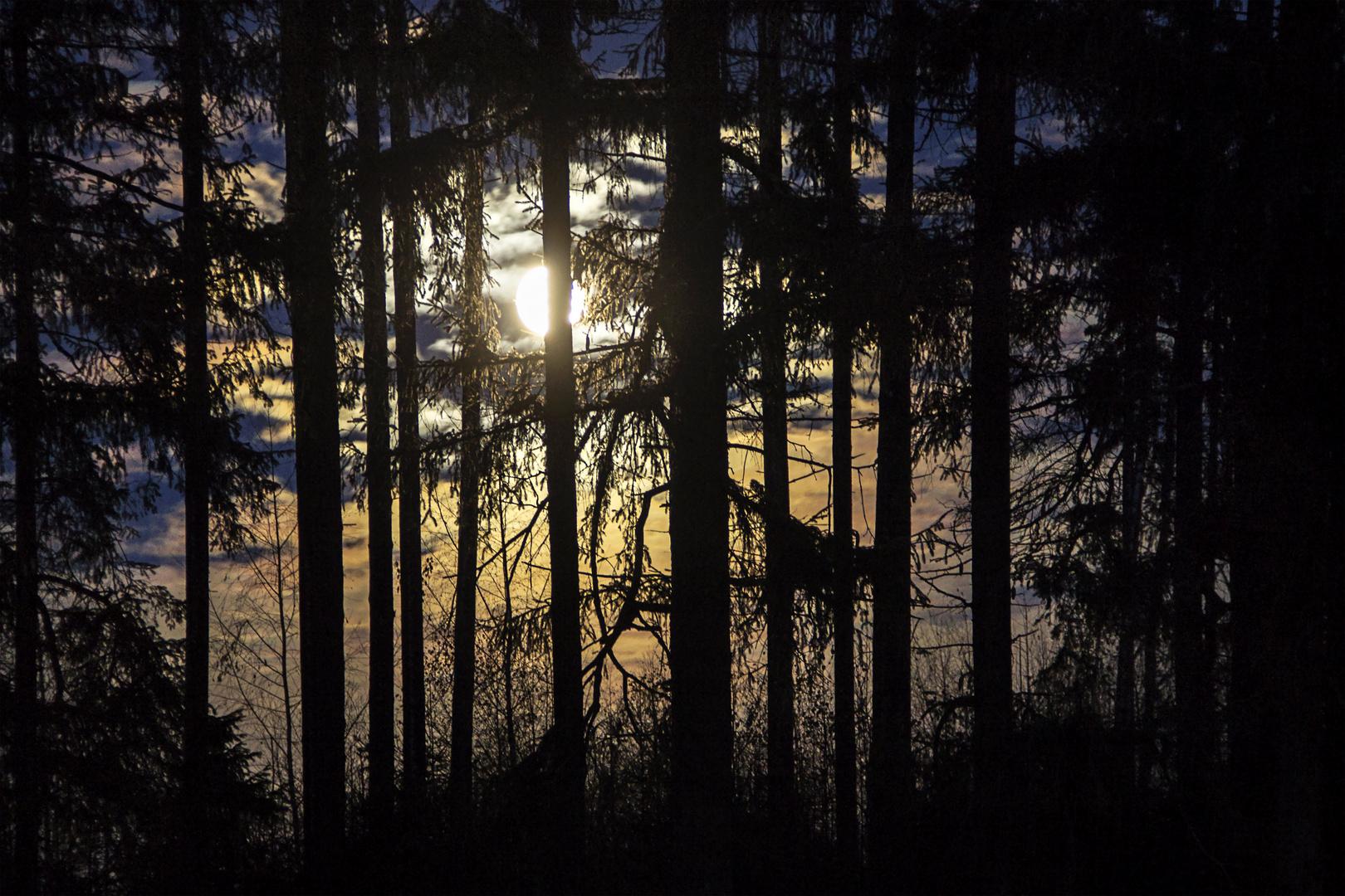 Helles Mondlicht im dunklen Wald