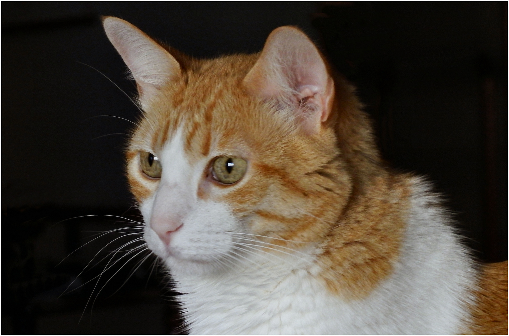 Hello friends, I`m Socrates the cat model.