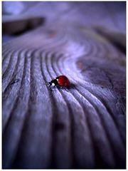 Hello Ladybird