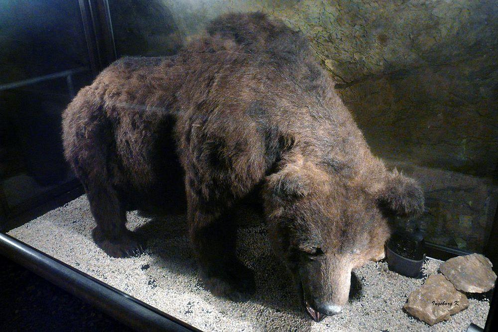 Hemer-Heinrichshöhle--Bär aus der Eiszeit