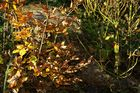 Herbst 04