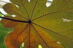 Herbst  -1-