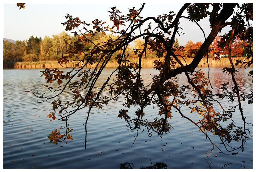 :: Herbst 1 ::