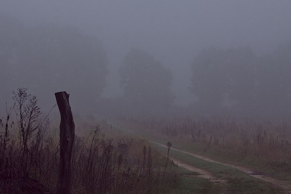 Herbst (1) - Waldweg im Nebel
