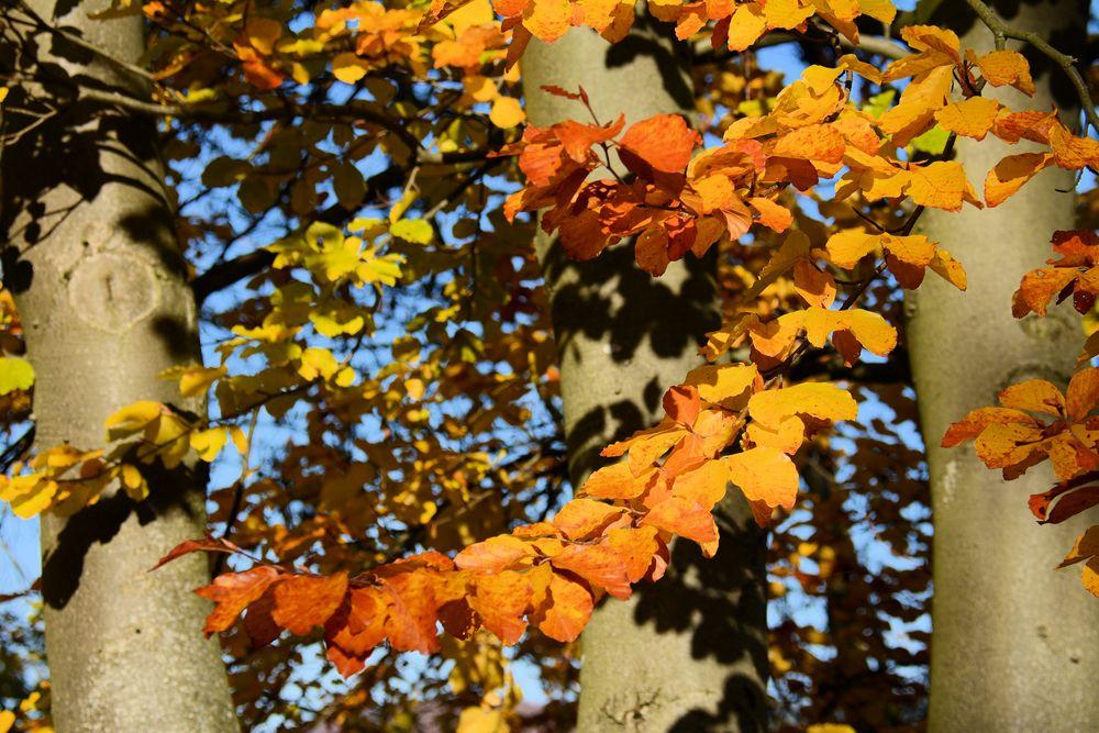 Herbst -10