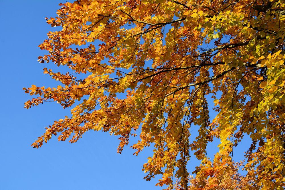 Herbst -11