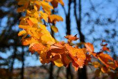 Herbst -13
