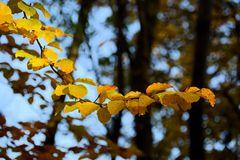 Herbst -14