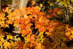 Herbst -16