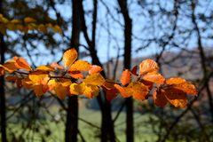 Herbst -17