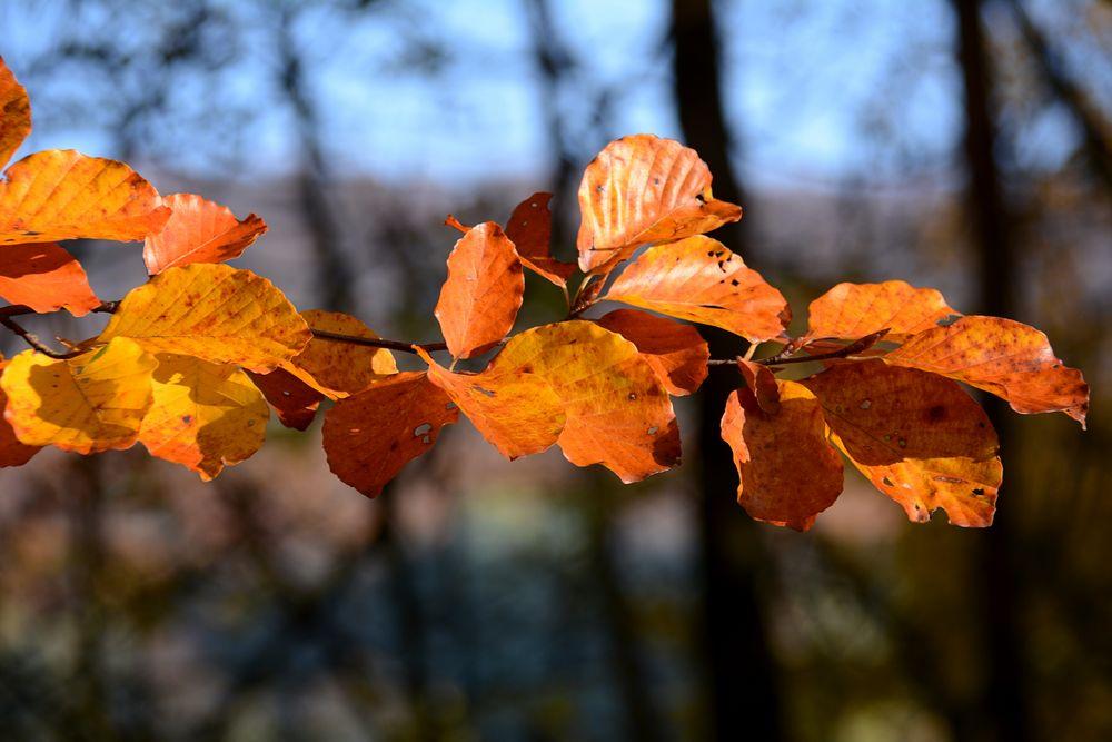 Herbst -18