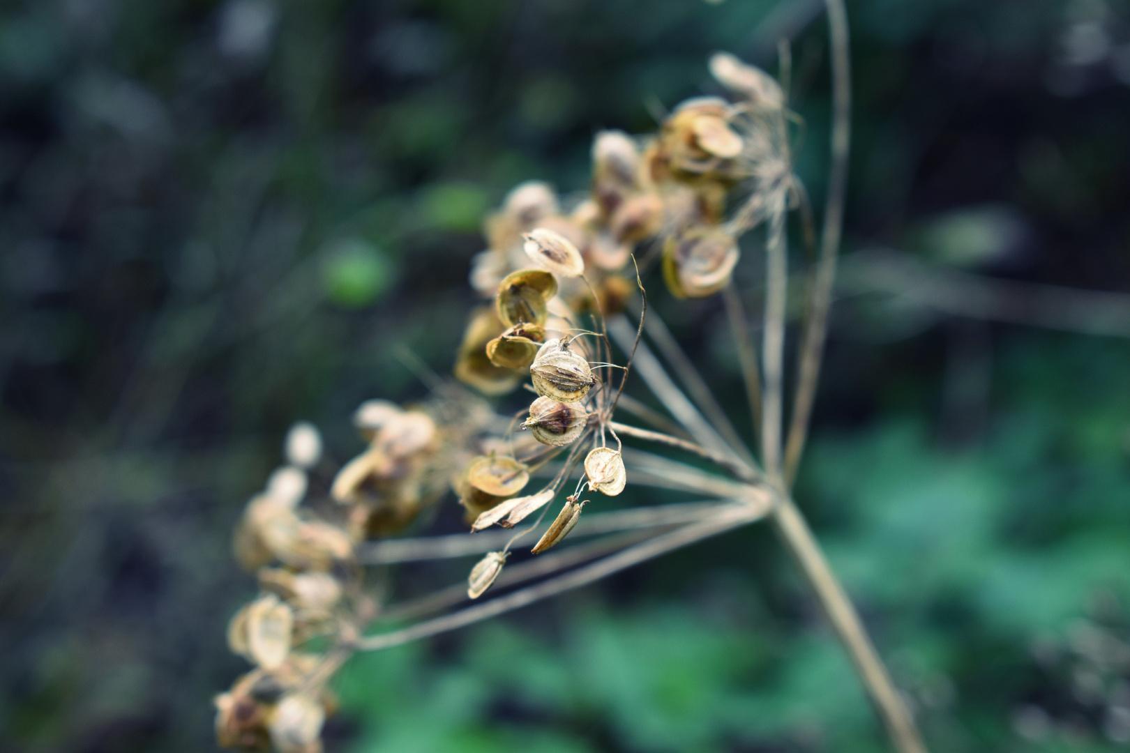 Herbst 19 II.